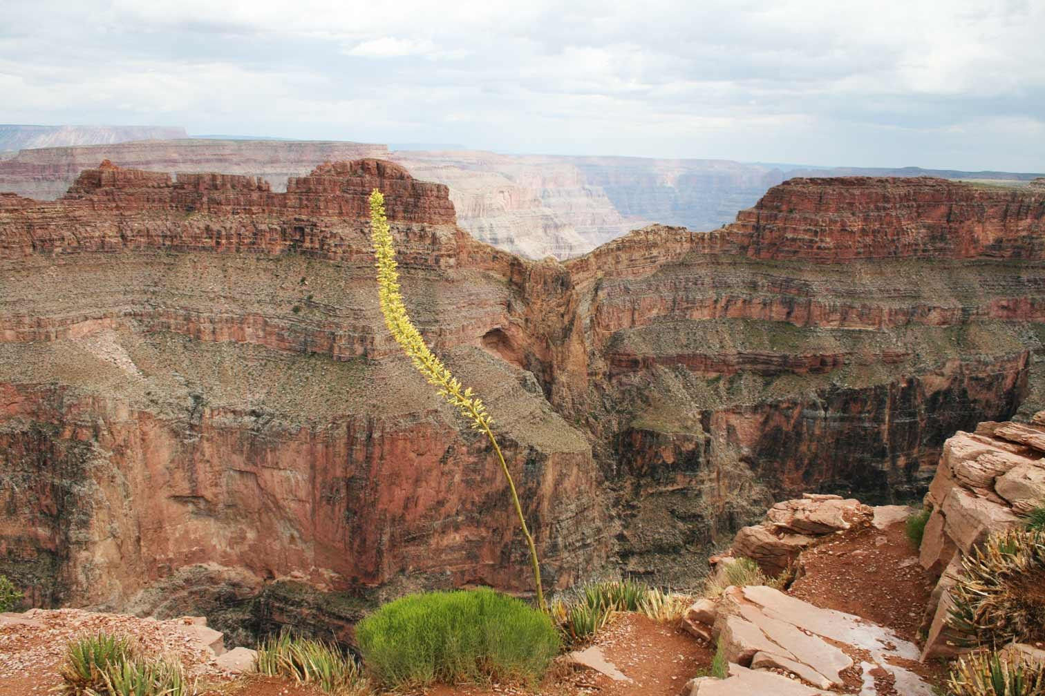 Grand Canyon West, Home of the Skywalk - Kingman Tourism